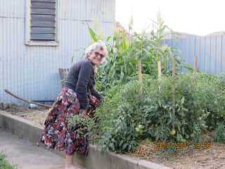 Maxien in the vegie garden in Australia.  2017.