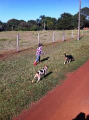 Taking the beagles for a walk at the farm.
