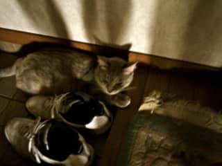 my cat Maku