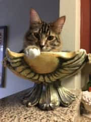 Sparky striking a pose in my pottery
