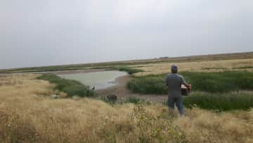 John releasing pheasants onto the Habitat