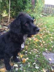 Our dog Coco, also known as Cocopuff, Cocobean, The Coconator