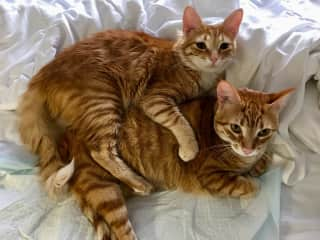Cuddles...