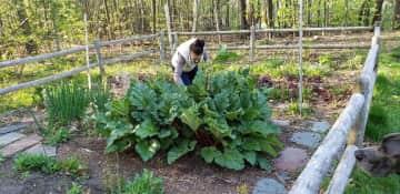 Perennial veggie and flower garden includes onions, garlic, asparagus, borage and rhubarb!