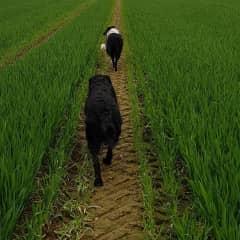 Daily walks with my doggies