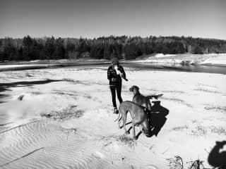 March 2019 - late winter morning walk on the beach with our rhodesian ridgebacks : grainne & ruari