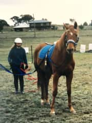 Me long reining a two year old warmblood Tanzen whom I bred.