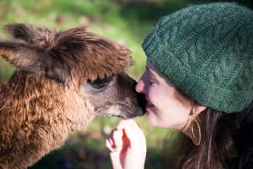 Falling in love with Pinot the baby alpaca