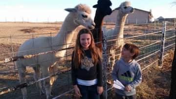 Sara and David Feeding Alpacas