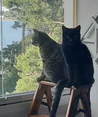 Sosuli and Castor, the rescue cats
