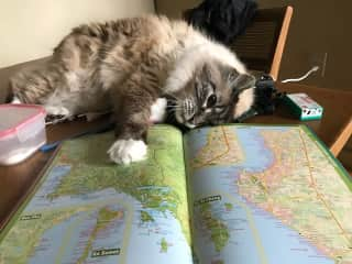I love to travel, locally and internationally. Maps are a particular passion. Here I attempt to study one, while Ahi the cat provides some direction.