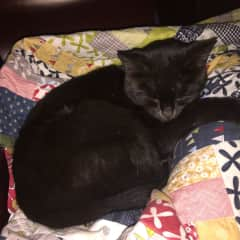 Cat Nap in South Australia