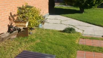 Summer day in back garden(