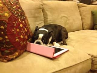 Oreo on the iPad