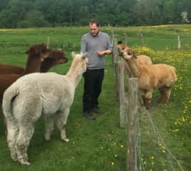 Chris feeding the alpacas at a housesit in Rotherfield