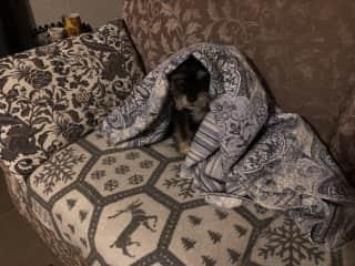 La sofa está preferido