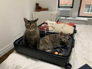 The Kitties!