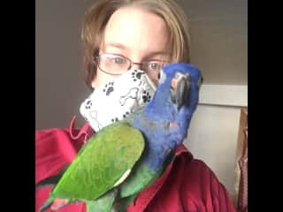 Learning how to look after birds :)