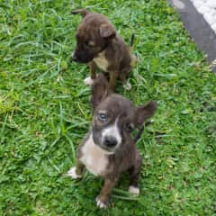 The puppies we rescued in Bali.