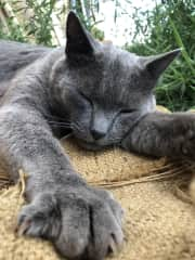 Grey Kitty, another working cat on the farm. I loved getting to cuddle and hang out with all the animals, and helped take care of them when the owners were out of town.