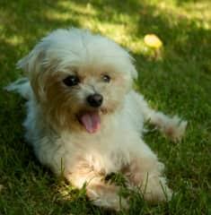 Luna, such a sweet little dog