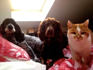 With Jess Jake and Sam who are ready for breakfast
