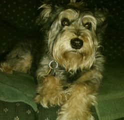 My dog, Zoe