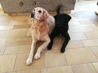 Our dogs Lucky and Nero