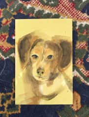 portret of dog