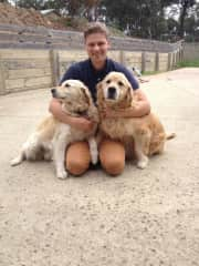 Our beautiful Golden Retrievers from Australia