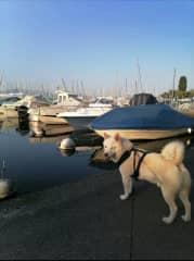 Dogsitting in Switzerland 2020