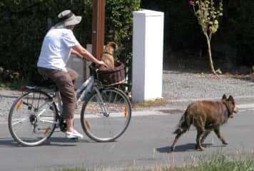 biking with my dogs