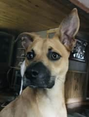 Chopper: spoiled, loveable, cuddle bug, well trained but does not play well with other dogs!