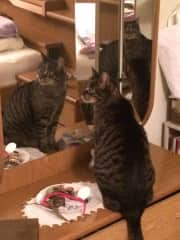 """Charly """"in the mirror"""""""