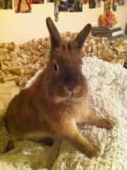 Effie the first bunny
