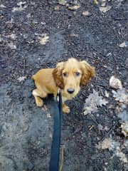 Me walking Marie, a very funny pup I used to walk