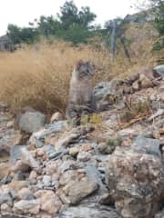 tinky our big cat, we also have his brother Guillermo