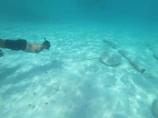 Franc snorkelling with sharks and manta