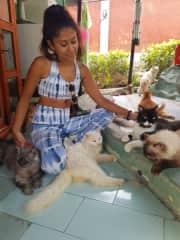 Cat rescue centre in Bali