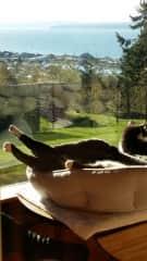 Tuxy in sunroom,