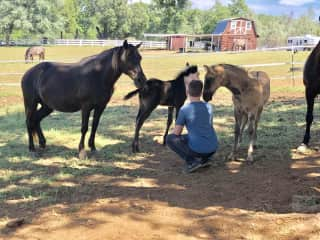 My 13 yo grandson meeting two of the 2019 foals
