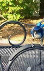 Birdwatching is a favorite activity.