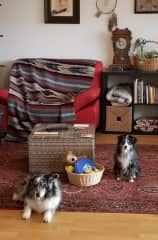 Our sweet furry friends, Millie and Alice, at our housesit in Zuzwil, Switzerland.