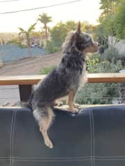 """Always ready for any action in the yard! """"Squirrel!!"""""""
