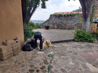 Chiquis made a friend while traveling
