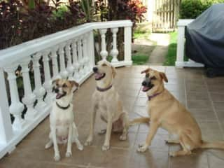 "Lucky, Roamer and Saint at ""Puppy School""."