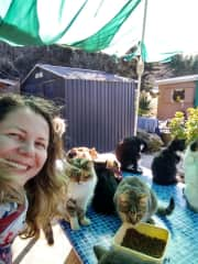 So many adorable cats at Tala monastery in Cyprus . This was my volunteering day. 2019
