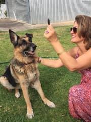 Mocha German Shepard I trained as a companion dog