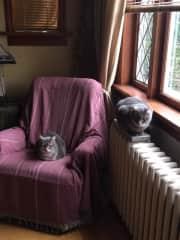 Rosco and Felix