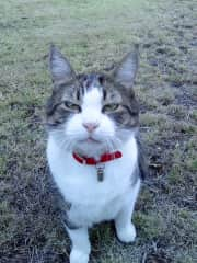 Tigs - What do you mean there is no Santa Paws!